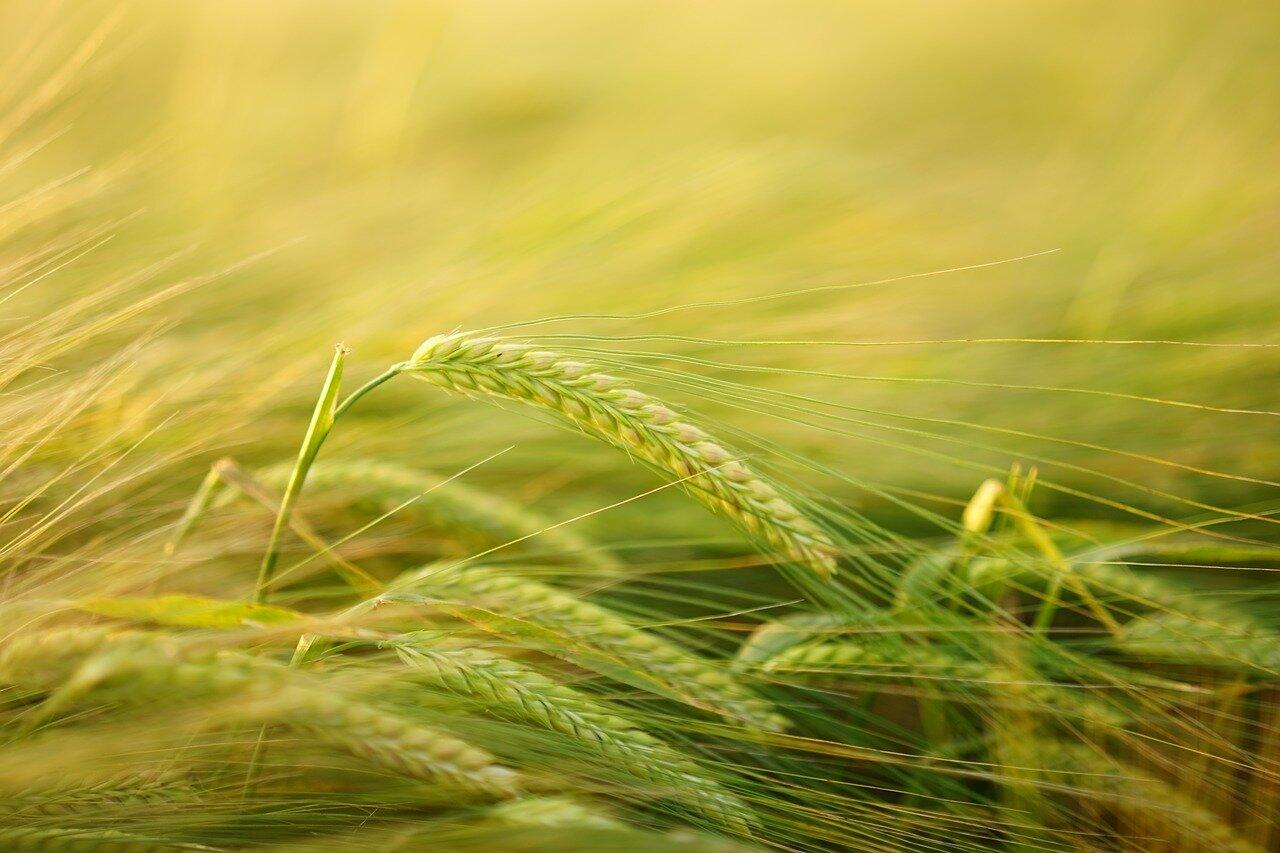 Zdrowe suplementy – na co warto zwrócić uwagę? Bio organic foods młody jęczmień allegro, zielony jęczmień opinie